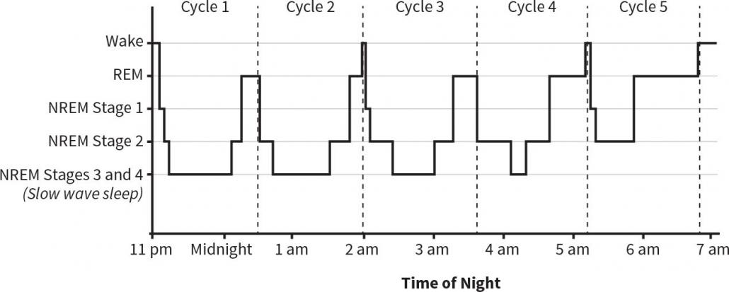 Graf ciklov spanja tekom noči.