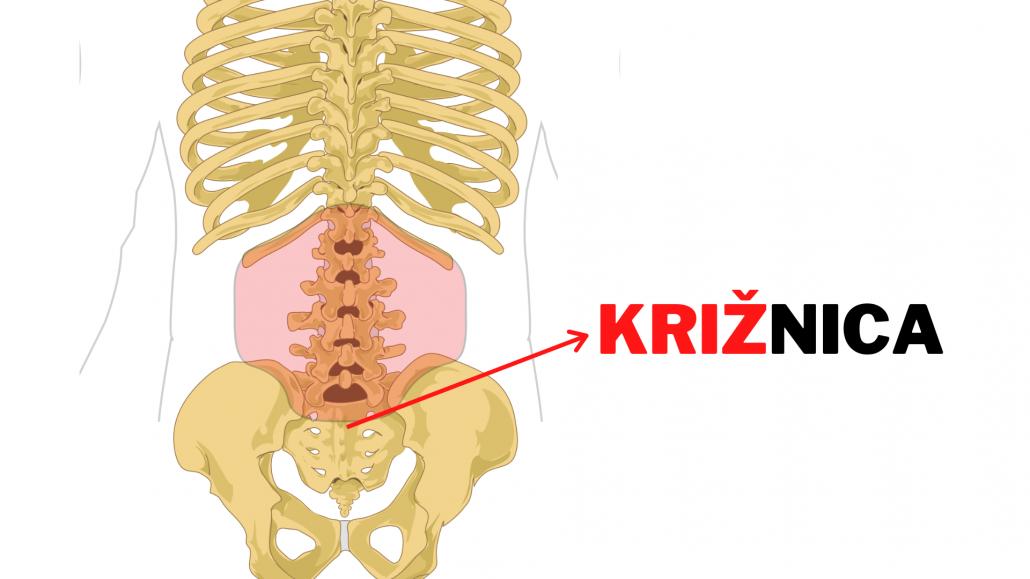 Izraz bolečine v križu se uporablja kot pogovorna izpeljanka iz besede križnica, ki opisuje kost pod ledvenim delom hrbta.